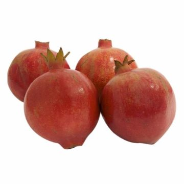 Picture of ANAR RED 500G