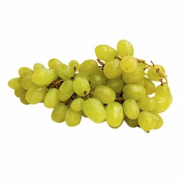 صورة GRAPES WHITE SEEDLESS  500G