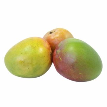 Picture of MANGO ROUND KENYA 500G